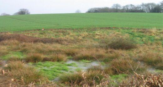 Zone humide à proximité d'un champs cultivé