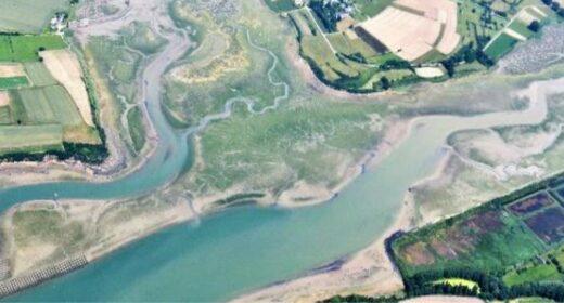 marée verte à Saint Jouan des Guerets