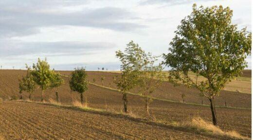 Parcelles agricoles en agroforesterie